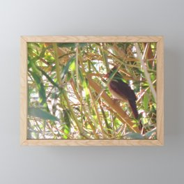 Female cardinal in the bamboo Framed Mini Art Print