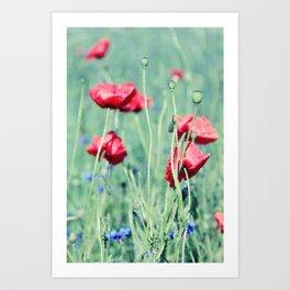 poppy flower Art Print