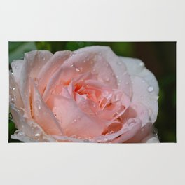 Pink rose and raindrops Rug