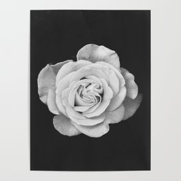 Rose, Flower, Scandinavian, Minimal, Modern, Wall art Poster