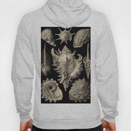 Ernst Haeckel Prosobranchia Sea Shells Hoody