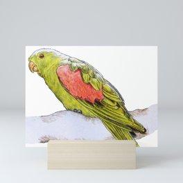 Snooping Parrot Mini Art Print