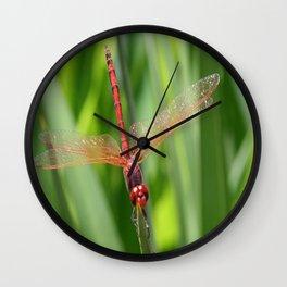 Closeup of Red Skimmer or Firecracker Dragonfly Wall Clock