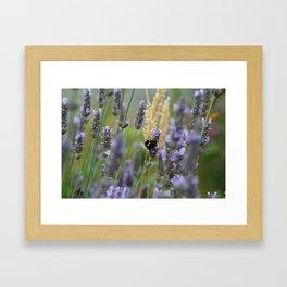 Wild Honey Bee Framed Art Print