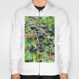 elderberry Hoody