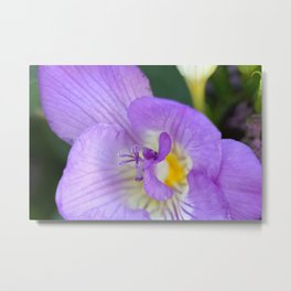 Fresia close-up Metal Print