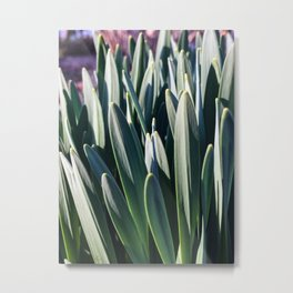 Early Spring Garden Metal Print