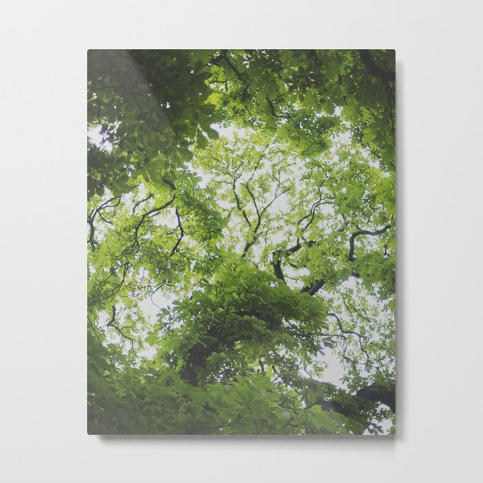 Up in the Trees Above Metal Print