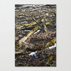 Shiny Spring Canvas Print