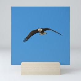 Eagle In Flight - Alaska Mini Art Print