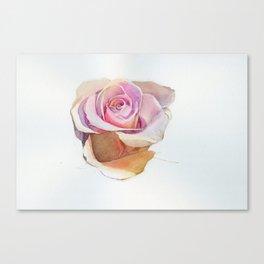 Single rose Canvas Print
