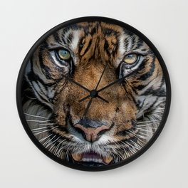 Tiger's Eyes Wall Clock