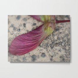Maple Seed Metal Print