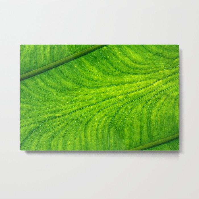 Leaf Paths Metal Print