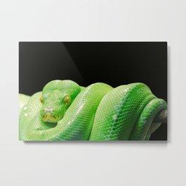 green python Metal Print