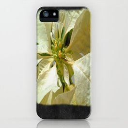 Pale Yellow Poinsettia 1 Blank P4F0 iPhone Case