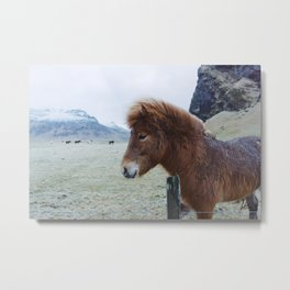 Brown Horse in Iceland Metal Print