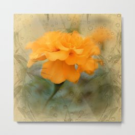 Orange Marigold  Raindrop Abstract Metal Print