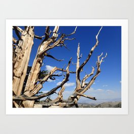 Trees of ancient times Art Print