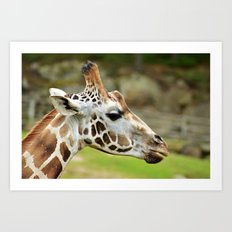 Giraff Art Print