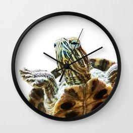 Small red-eared turtle in aquarium Wall Clock