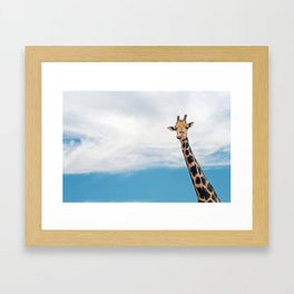 Giraffe neck and head against the clear blue sky Framed Art Print