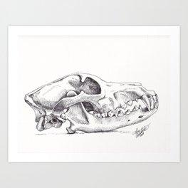 Wolf Skull (Canis lupus) Art Print