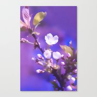 cherry blossoms Canvas Prints featuring CHERRY BLOSSOMS by VIAINA