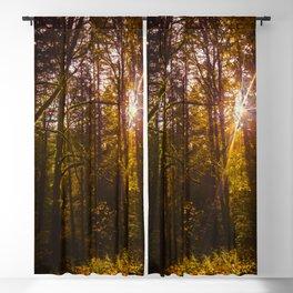 Through the Trees Blackout Curtain