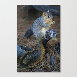 Mr. Squirrel! Canvas Print
