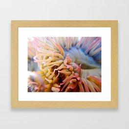 Aquatic Bloom Framed Art Print