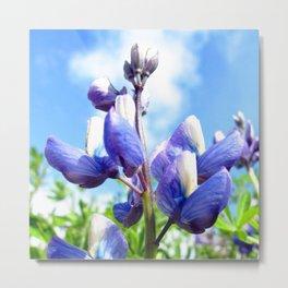 Watercolor Flower, Purple Lupine 07, Northern Iceland Metal Print