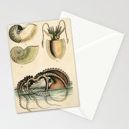 Vintage Natural History Argonaut Paper Nautilus Octopus Illustration  Stationery Cards