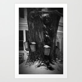 Sugaring 2 - Maple Syrup Art Print