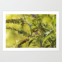 Great Spangled Fritillary on a Butterfly Bush Art Print