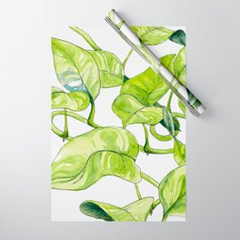 Devils Ivy Illustration Wrapping Paper