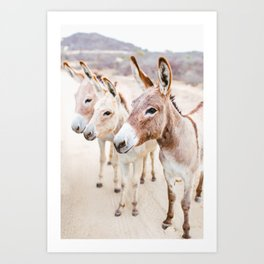 Three Donkeys in Baja, Mexico Art Print