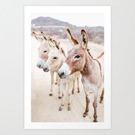 Three Donkeys in Baja, Mexico Art Print