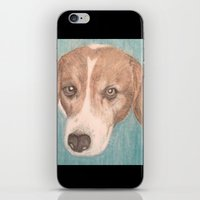 beagle iPhone & iPod Skins featuring Beagle by Thomas Whitfield