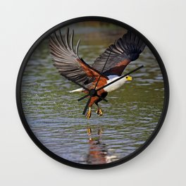 African fish eagle fishing in a river - Africa wildlife Wall Clock