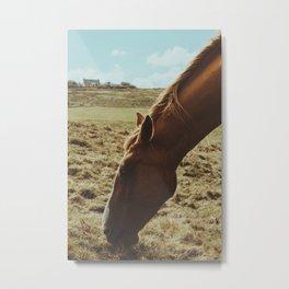 Horsey! Metal Print