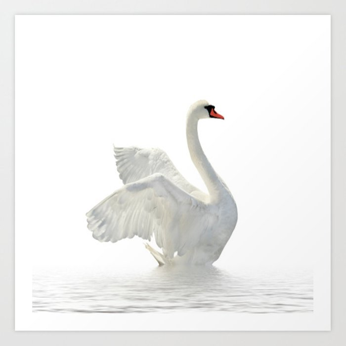 WHITE ON WHITE-BEAUTIFUL SWAN Art Print