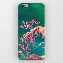 Renewal 2,  Spring Botanical New Red Maple Leaves Dance in the Sunlight iPhone Skin