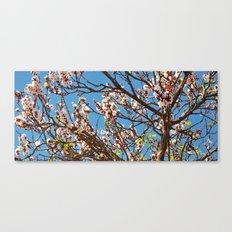 Spring 2013 01 Canvas Print