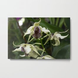 Longwood Gardens Orchid Extravaganza 22 Metal Print