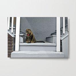 Doorstep Cat Metal Print