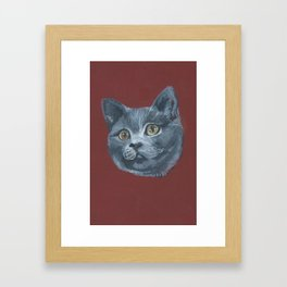 Grey Gray Cat Kitten Head Green Eyed Framed Art Print