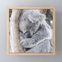 Sleeping Koala Framed Mini Art Print