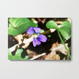 Violet 03 Metal Print