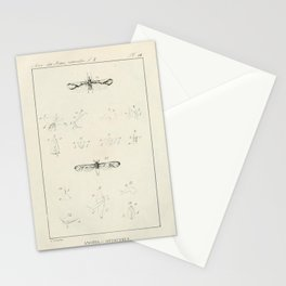 Vintage Scientific Print - 1824 - Insect Genera Anotia and Otiocerus Stationery Cards